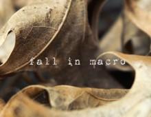 Fall In Macro